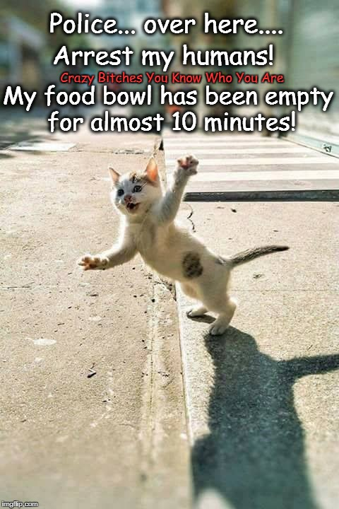 Police... over here.... Crazy B**ches You Know Who You Are Arrest my humans! My food bowl has been empty for almost 10 minutes! | image tagged in cat | made w/ Imgflip meme maker