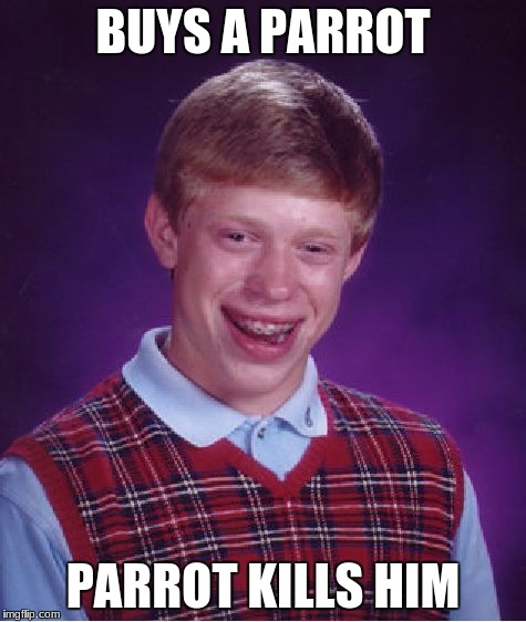 Bad Luck Brian Meme | BUYS A PARROT PARROT KILLS HIM | image tagged in memes,bad luck brian | made w/ Imgflip meme maker