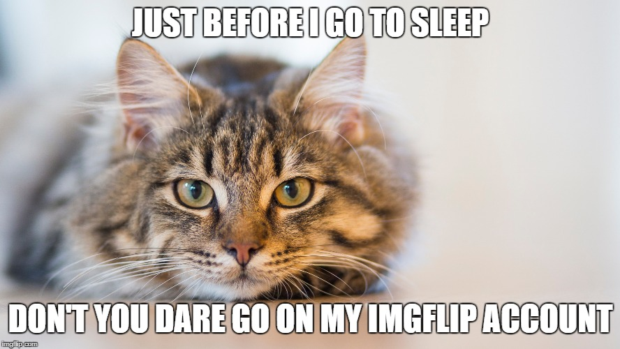 don't you dare cat | JUST BEFORE I GO TO SLEEP DON'T YOU DARE GO ON MY IMGFLIP ACCOUNT | image tagged in cat,imgflip,account | made w/ Imgflip meme maker