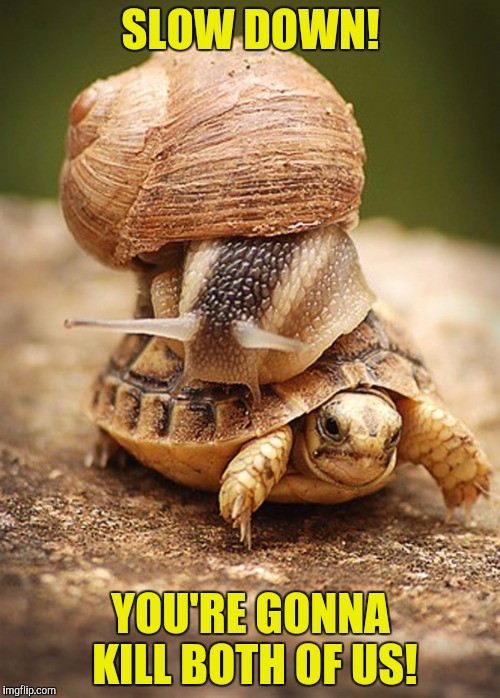 SLOW DOWN! YOU'RE GONNA KILL BOTH OF US! | image tagged in memes,animals,powermetalhead,funny,turtles,snail | made w/ Imgflip meme maker