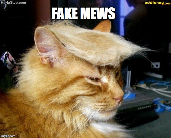 donald trump cat |  FAKE MEWS | image tagged in donald trump cat | made w/ Imgflip meme maker