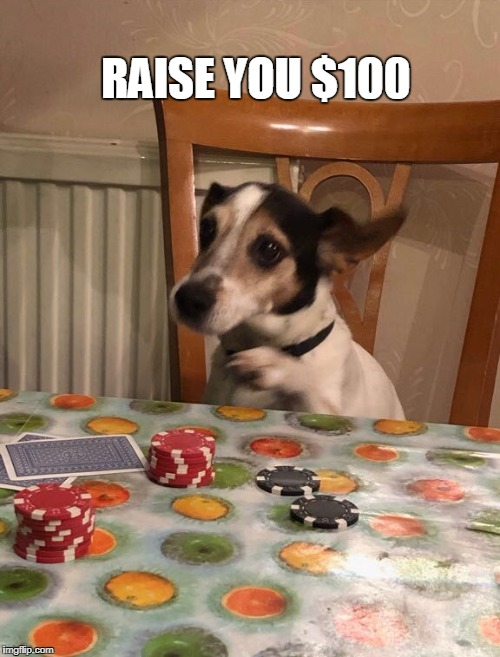 RAISE YOU $100 | image tagged in poker,dog | made w/ Imgflip meme maker