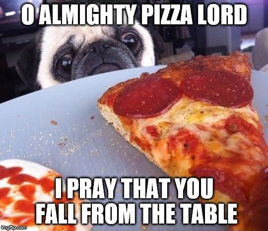 Pizza Pug | O ALMIGHTY PIZZA LORD I PRAY THAT YOU FALL FROM THE TABLE | image tagged in pizza pug | made w/ Imgflip meme maker