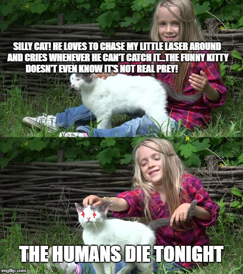 Silly Kitty | SILLY CAT! HE LOVES TO CHASE MY LITTLE LASER AROUND AND CRIES WHENEVER HE CAN'T CATCH IT...THE FUNNY KITTY DOESN'T EVEN KNOW IT'S NOT REAL P | image tagged in cats,angry cat,lasers,funny cats | made w/ Imgflip meme maker