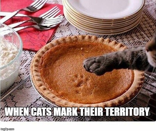When cats mark their territory. | WHEN CATS MARK THEIR TERRITORY | image tagged in cats,funny cats,funny animals,funny memes,funny food,cat lovers | made w/ Imgflip meme maker