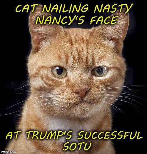 CAT NAILING NASTY NANCY'S FACE AT TRUMP'S SUCCESSFUL SOTU | image tagged in democrat democat | made w/ Imgflip meme maker