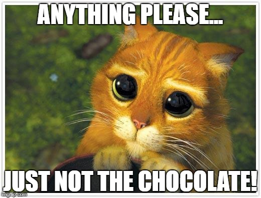 Shrek Cat Meme | ANYTHING PLEASE... JUST NOT THE CHOCOLATE! | image tagged in memes,shrek cat | made w/ Imgflip meme maker