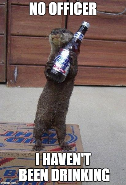 beer otter | NO OFFICER I HAVEN'T BEEN DRINKING | image tagged in beer otter | made w/ Imgflip meme maker