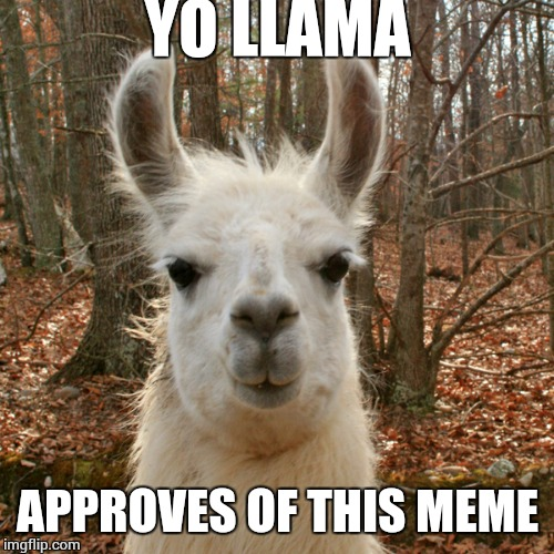 yo llama | YO LLAMA APPROVES OF THIS MEME | image tagged in yo llama | made w/ Imgflip meme maker