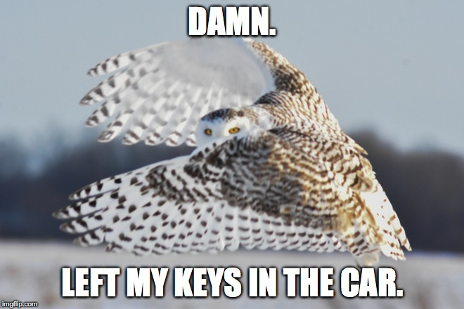 Ever Have One Of Those Days? | DAMN. LEFT MY KEYS IN THE CAR. | image tagged in monday gets an extension | made w/ Imgflip meme maker