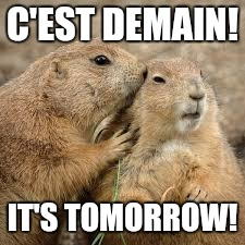 C'EST DEMAIN! IT'S TOMORROW! | image tagged in groundhog | made w/ Imgflip meme maker