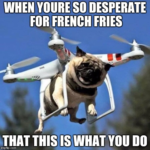 Flying Pug | WHEN YOURE SO DESPERATE FOR FRENCH FRIES THAT THIS IS WHAT YOU DO | image tagged in flying pug | made w/ Imgflip meme maker