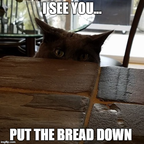 I SEE YOU... PUT THE BREAD DOWN | image tagged in diet,cats,don't do it,carbs,i'm watching you | made w/ Imgflip meme maker