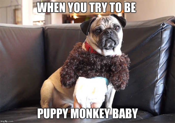 Failed To Be Puppy Monkey Baby | WHEN YOU TRY TO BE PUPPY MONKEY BABY | image tagged in memes | made w/ Imgflip meme maker