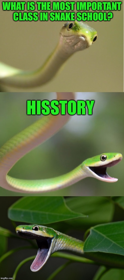 It's a rough green snake! | WHAT IS THE MOST IMPORTANT CLASS IN SNAKE SCHOOL? HISSTORY | image tagged in bad pun snake,memes,puns,snake,snake puns,jokes | made w/ Imgflip meme maker