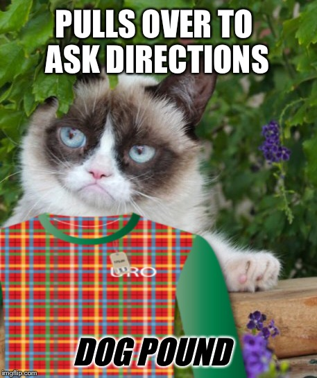 PULLS OVER TO ASK DIRECTIONS DOG POUND | made w/ Imgflip meme maker