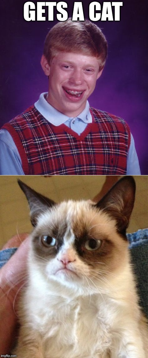 Bad Luck Brian gets a cat | GETS A CAT | image tagged in memes,grumpy cat,bad luck brian,cats,no dogs | made w/ Imgflip meme maker
