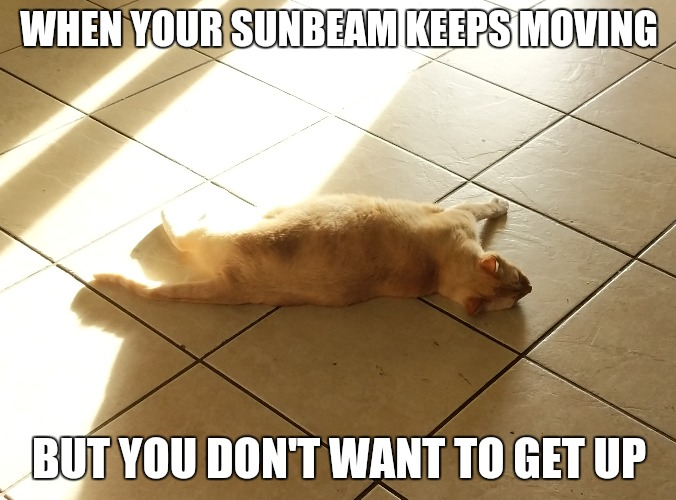 WHEN YOUR SUNBEAM KEEPS MOVING BUT YOU DON'T WANT TO GET UP | image tagged in cat | made w/ Imgflip meme maker