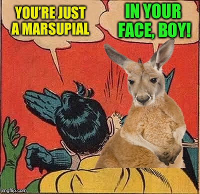 YOU'RE JUST A MARSUPIAL IN YOUR FACE, BOY! | made w/ Imgflip meme maker