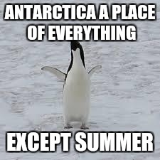 ANTARCTICA A PLACE OF EVERYTHING EXCEPT SUMMER | image tagged in penguin | made w/ Imgflip meme maker