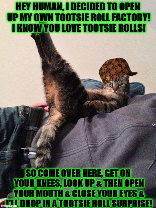 HEY HUMAN, I DECIDED TO OPEN UP MY OWN TOOTSIE ROLL FACTORY! I KNOW YOU LOVE TOOTSIE ROLLS! SO COME OVER HERE, GET ON YOUR KNEES, LOOK UP &  | image tagged in sarcastic douche bag cat,scumbag | made w/ Imgflip meme maker