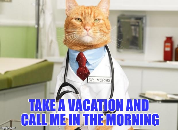 Cat Doctor | TAKE A VACATION AND CALL ME IN THE MORNING | image tagged in cat doctor | made w/ Imgflip meme maker