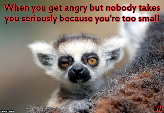 When you get angry but nobody takes you seriously because you're too small. RW | image tagged in angry,small,funny memes | made w/ Imgflip meme maker