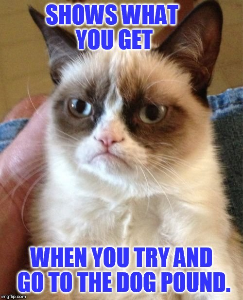 Grumpy Cat Meme | SHOWS WHAT YOU GET WHEN YOU TRY AND GO TO THE DOG POUND. | image tagged in memes,grumpy cat | made w/ Imgflip meme maker