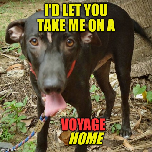 I'D LET YOU TAKE ME ON A HOME VOYAGE | made w/ Imgflip meme maker