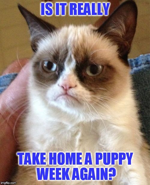 Grumpy Cat Meme | IS IT REALLY TAKE HOME A PUPPY WEEK AGAIN? | image tagged in memes,grumpy cat | made w/ Imgflip meme maker