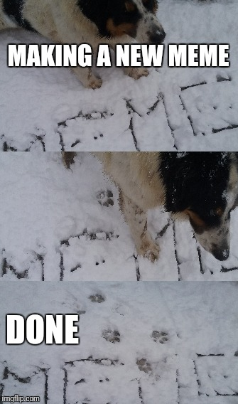 New meme | MAKING A NEW MEME DONE | image tagged in memes,new meme,new memes,dog,dogs,snow | made w/ Imgflip meme maker