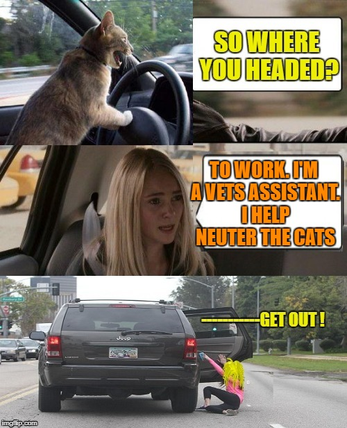 The Cat Driving - Thanks DashHopes & ArcMis for the inspiration  | TO WORK. I'M A VETS ASSISTANT. I HELP NEUTER THE CATS | image tagged in funny memes,cats,the rock driving,vets office | made w/ Imgflip meme maker