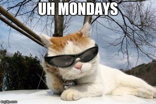 Cool Sunglasses Cat | UH MONDAYS | image tagged in cool sunglasses cat | made w/ Imgflip meme maker