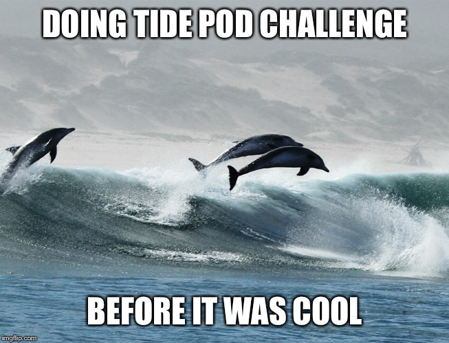 Dolphin tide pod challenge | DOING TIDE POD CHALLENGE BEFORE IT WAS COOL | image tagged in tide pod challenge,tide pods,dolphin,dumb joke dolphin,ocean,clever | made w/ Imgflip meme maker