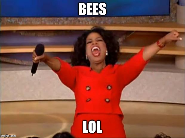 Oprah You Get A Meme | BEES LOL | image tagged in memes,oprah you get a | made w/ Imgflip meme maker