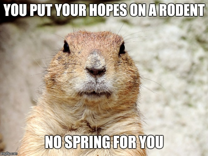 YOU PUT YOUR HOPES ON A RODENT NO SPRING FOR YOU | image tagged in groundhog day | made w/ Imgflip meme maker