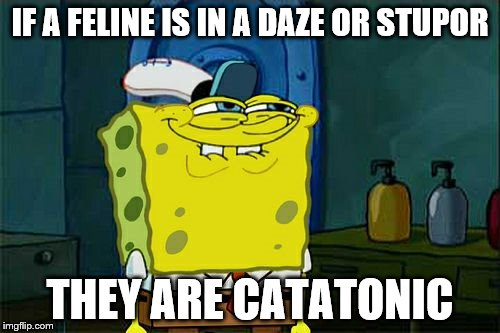 My final submission for the day and my final submission for my Exceptionally Bad Pun Week Jan 26 to Feb 2 | IF A FELINE IS IN A DAZE OR STUPOR THEY ARE CATATONIC | image tagged in memes,dont you squidward | made w/ Imgflip meme maker