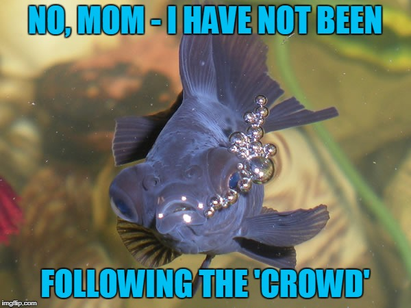 NO, MOM - I HAVE NOT BEEN FOLLOWING THE 'CROWD' | made w/ Imgflip meme maker