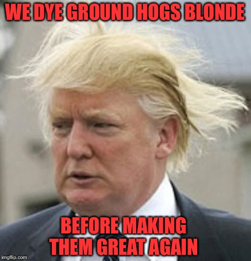 WE DYE GROUND HOGS BLONDE BEFORE MAKING THEM GREAT AGAIN | made w/ Imgflip meme maker