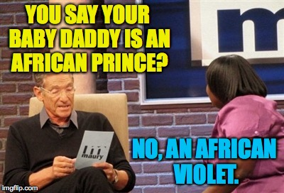 YOU SAY YOUR BABY DADDY IS AN AFRICAN PRINCE? NO, AN AFRICAN VIOLET. | made w/ Imgflip meme maker