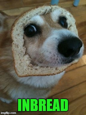 in bread | INBREAD | image tagged in dog | made w/ Imgflip meme maker