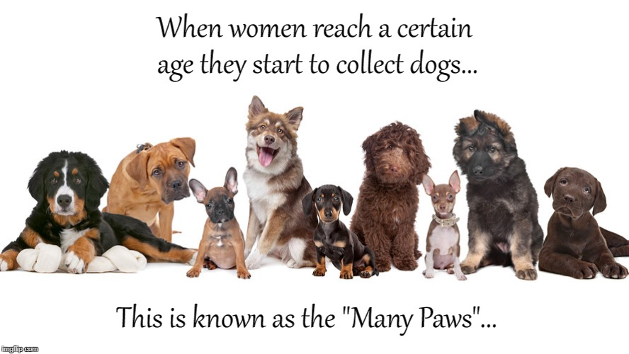 "A certain age... | When women reach a certain age they start to collect dogs... This is known as the ""Many Paws""... 