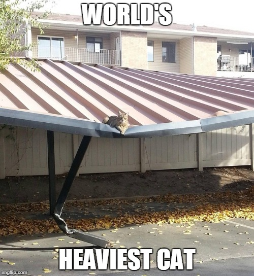 Or dragon using illusion spell | WORLD'S HEAVIEST CAT | image tagged in fat cat | made w/ Imgflip meme maker