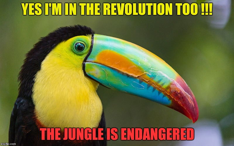 Revolution in the Jungle | YES I'M IN THE REVOLUTION TOO !!! THE JUNGLE IS ENDANGERED | image tagged in jungle,rain forest,extinction | made w/ Imgflip meme maker