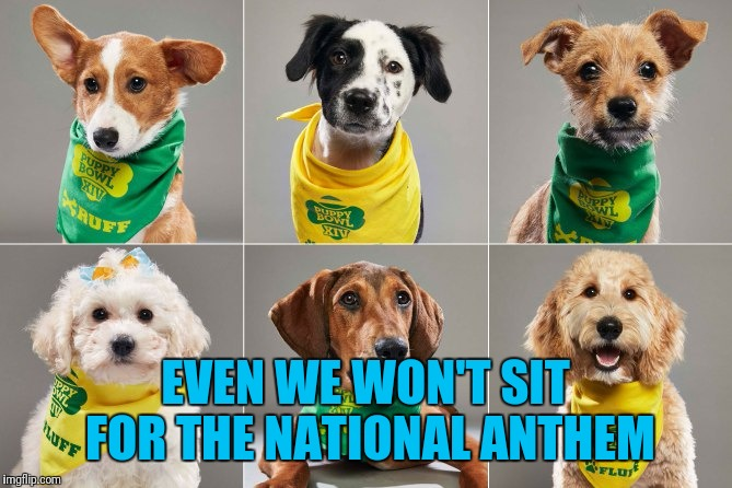 2018 Puppy Bowl; A Better Alternative to The Disrespectful Protesters Being Paid Millions to Play a Game. | EVEN WE WON'T SIT FOR THE NATIONAL ANTHEM | image tagged in puppy,kneeling,sit down,national anthem,superbowl,protesters | made w/ Imgflip meme maker