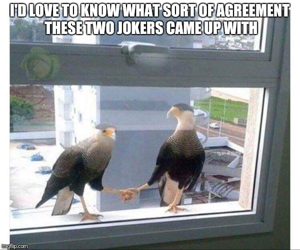 Put it there pal! | I'D LOVE TO KNOW WHAT SORT OF AGREEMENT THESE TWO JOKERS CAME UP WITH | image tagged in funny birds,funny handshake | made w/ Imgflip meme maker