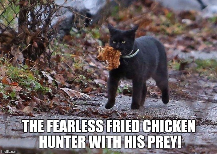 Fried chicken hunter! | THE FEARLESS FRIED CHICKEN HUNTER WITH HIS PREY! | image tagged in funny cat,funny cat and chicken,funny fried chicken | made w/ Imgflip meme maker