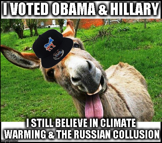 democrat donkey | I VOTED OBAMA & HILLARY I STILL BELIEVE IN CLIMATE WARMING & THE RUSSIAN COLLUSION | image tagged in stupid democrats,kool-aid,antifa losers,retarded socialists,democucks | made w/ Imgflip meme maker