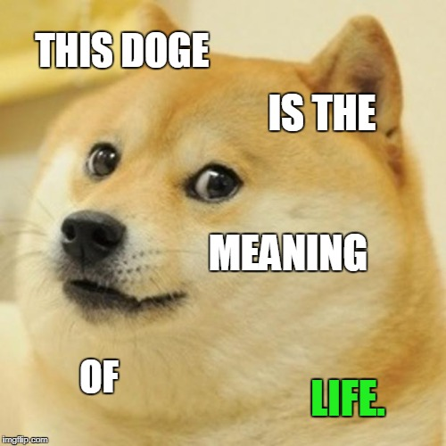 Doge Meme | THIS DOGE IS THE MEANING OF LIFE. | image tagged in memes,doge | made w/ Imgflip meme maker