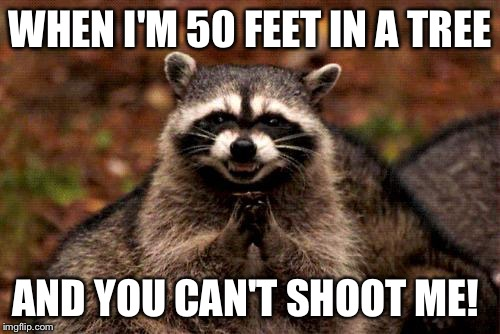 Evil Plotting Raccoon Meme | WHEN I'M 50 FEET IN A TREE AND YOU CAN'T SHOOT ME! | image tagged in memes,evil plotting raccoon | made w/ Imgflip meme maker